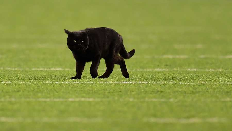A black cat runs on the field during the second quarter of the New York Giants and Dallas Cowboys game at MetLife Stadium on November 04, 2019 in East Rutherford, New Jersey.