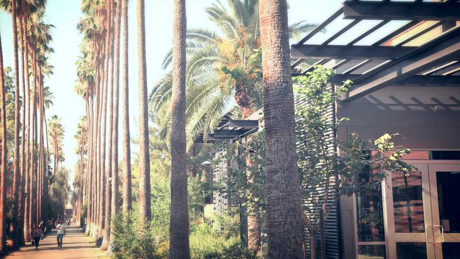 Palm Walk at ASU