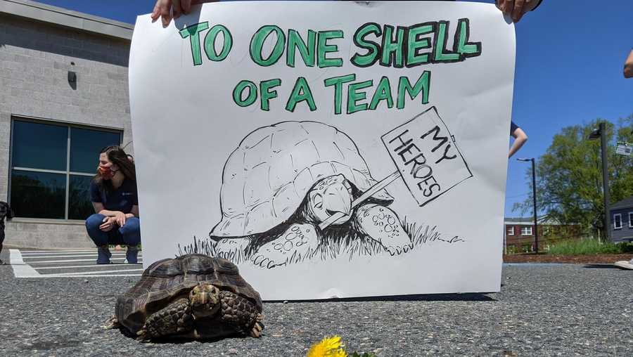 jenny the 53 year old tortoise has been adopted