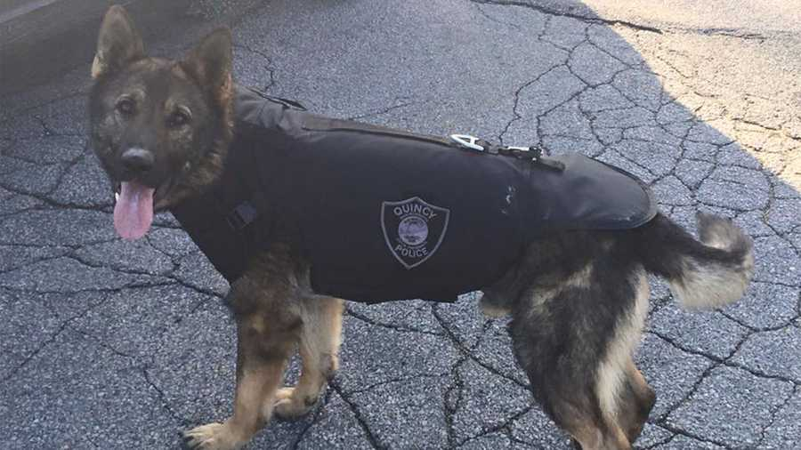 "K-9 ""Major"" of the Quincy Police Department"