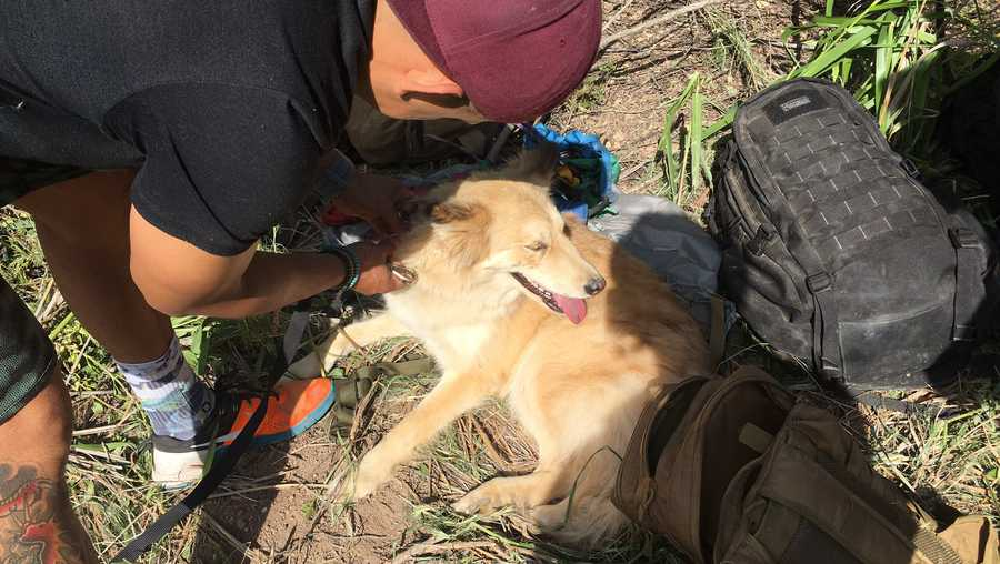 Firefighters rescued a dog on Sunday, April 3, 2017, who fell down a 30-foot well, the Los Angeles County Fire Department said.