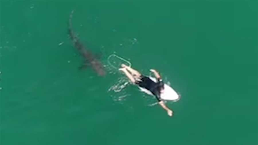 Drone operators warned surfer Matt Wilkinson about the shark.