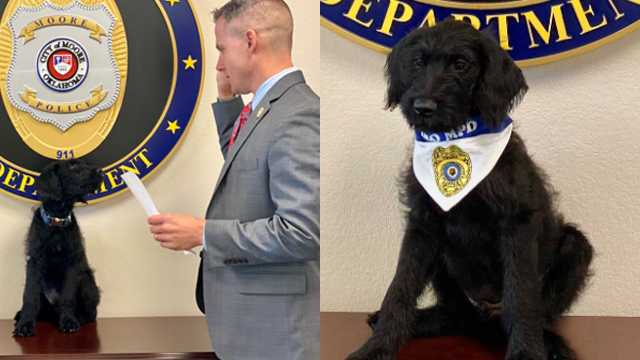 The 3-month-old schnoodle, a schnauzer-poodle mix, was donated and his training and certification as a bonafide therapy dog are also being donated, police officials said.
