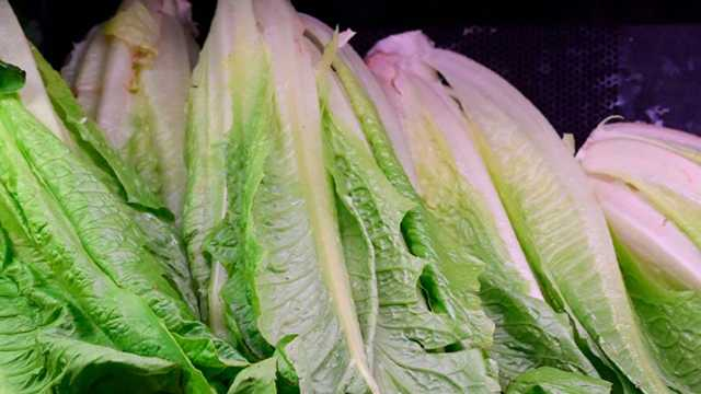 Romaine lettuce file photo