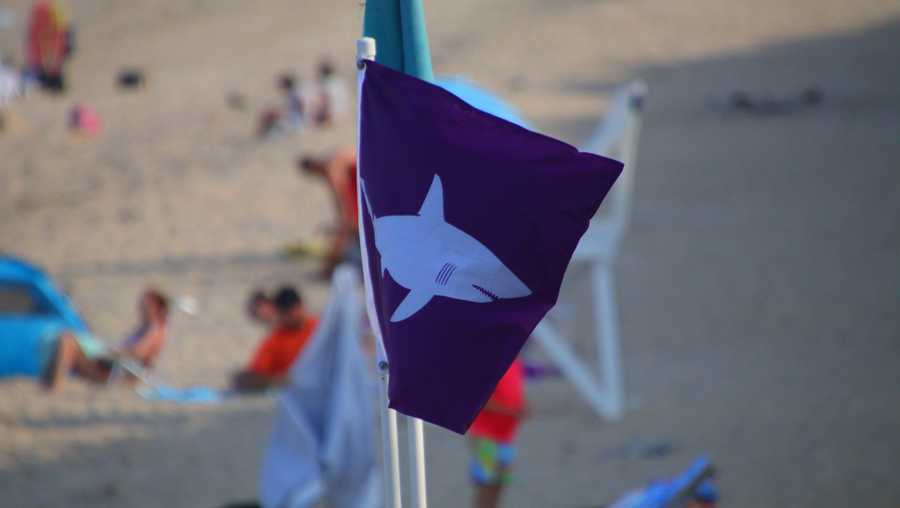 Shark Flag Cape Cod Beach Nauset Beach