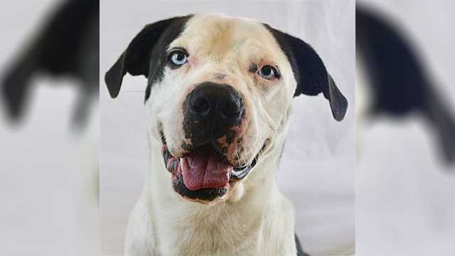 St. Nick is one of the adoptable animals available in Norman Animal Welfare's upcoming free adoption event.