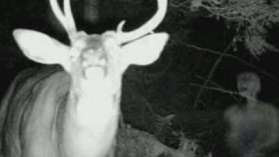 This hunter claims a ghost photobombed his nighttime trail camera