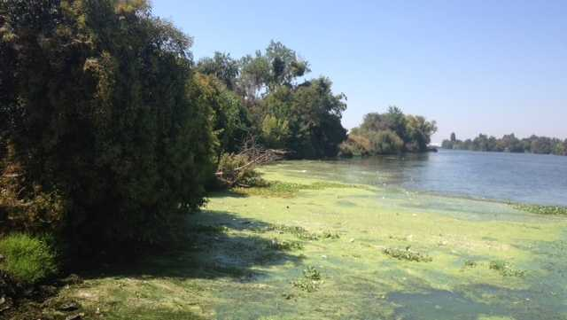 Toxic algae bloom warning issued for Delta areas in Contra Costa Co. - KCRA Sacramento