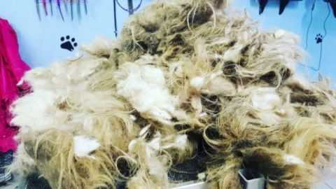 dog - matted fur - BGE Grooming
